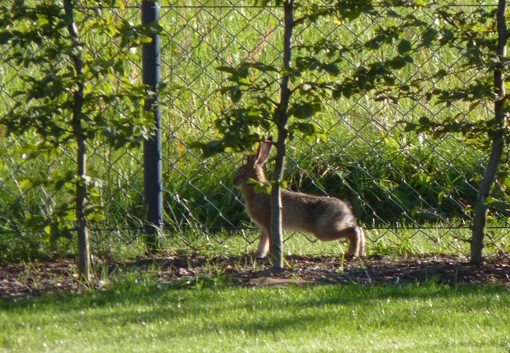 Ein kleiner Hase in unserem Garten geboren.